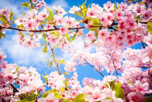 Spring tree   Luckybansko