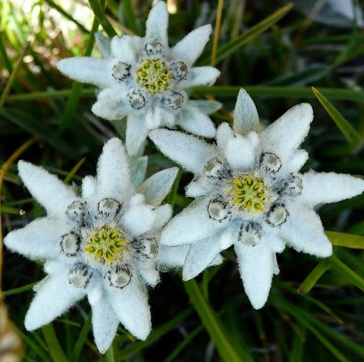 Plant Pirin Park | Lucky Bansko