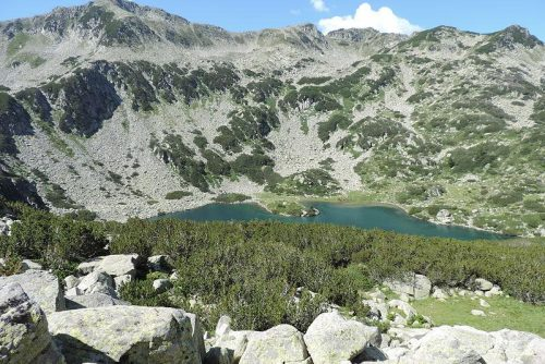 Picture of Fish Banderishko Lake | Lucky Bansko SPA & Relax