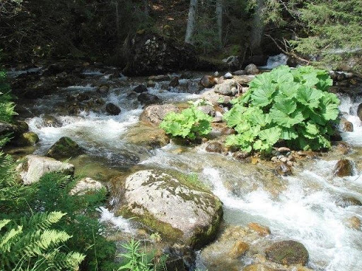 The Bistritsa River in the Pirin Mountains